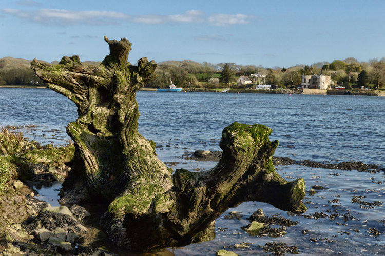 Beauty In Nature Day Dragon Driftwood Growth Nature No People Outdoors Scenics Sea Sky Tranquility Tree Water