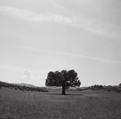 Lone tree. Taking Photos Check This Out Blackandwhite Black & White Film Filmisnotdead Mamiya Believeinfilm Nature EyeEm Nature Lover Landscape_Collection Landscape Melancholic Landscapes Alone Lonely Tree TreePorn Tree_collection  Ilford