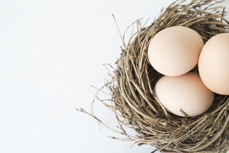 Eggs in the Nest White White Background Spring Springtime Skin Color Season  Raw Food Organic Food Organic Nest Objects Macro Little Place Indoors  Hideout Food Decoration Brown Basket Backgrounds Raw Food Raw Nesting Easter Eggs Easter Decor Decoration Bio Egg