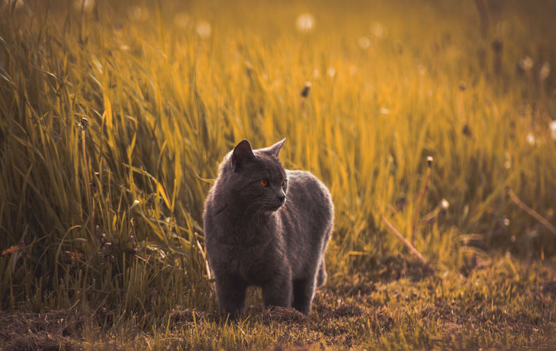 Cat In Grass On Field