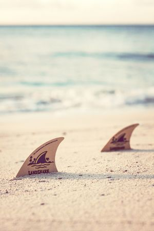 land shark~ Simplicity Photography Paradise Beach
