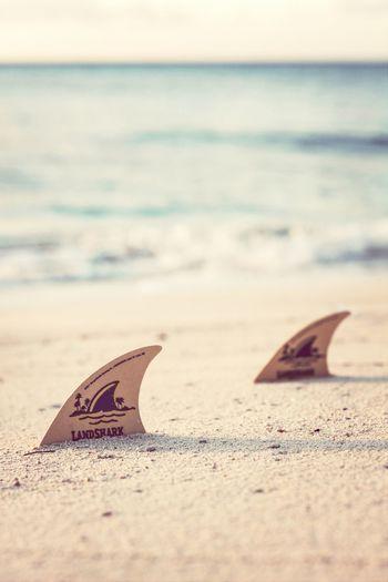 land shark~