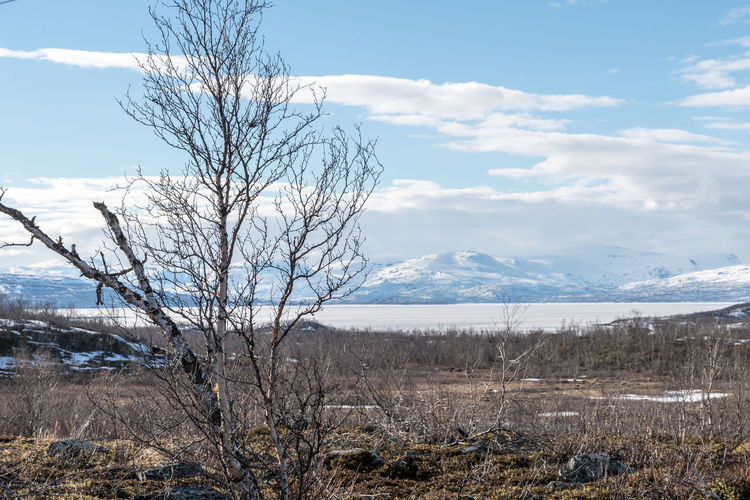 Panorama Abisko with tree Abisko Bare Tree Beauty In Nature Day Landscape Mountain Nature No People Outdoors Scenics Sky Sweden Tranquil Scene Tranquility Tree Water