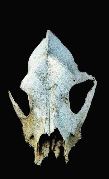 Skull Skulls Skull Face Skulls♥ Skull Art Skullface Skulls 💀 Skulls. Skulls💀 Skullsteel Calavera  Calaveras Calaveracollection Calavera  Sinister Sinister♡ Sinister