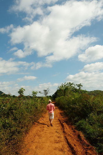 Rear View Of Man Walking Amidst Plants On Dirt Road