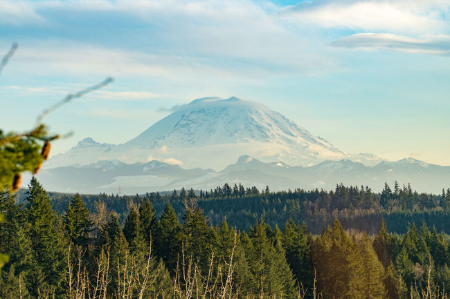 Beauty In Nature Cloud - Sky Day Landscape Mountain Mountain Range Mt. Rainier Nature No People Outdoors Pacific Northwest  PNW Scenics Sky Tranquil Scene Tranquility Tree Trees
