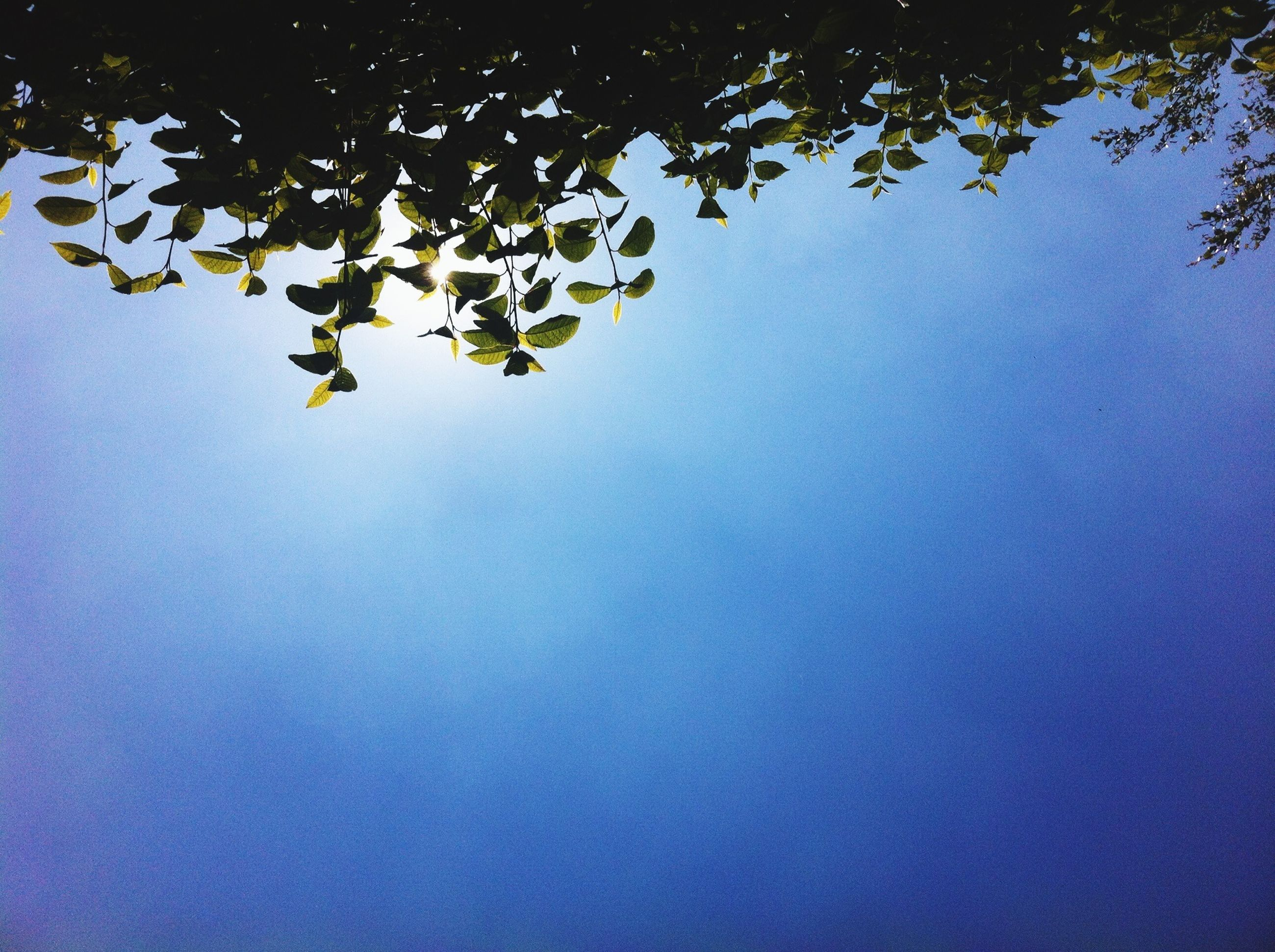 low angle view, tree, growth, clear sky, branch, nature, leaf, beauty in nature, copy space, tranquility, sky, no people, outdoors, blue, day, sunlight, plant, scenics, tranquil scene, silhouette