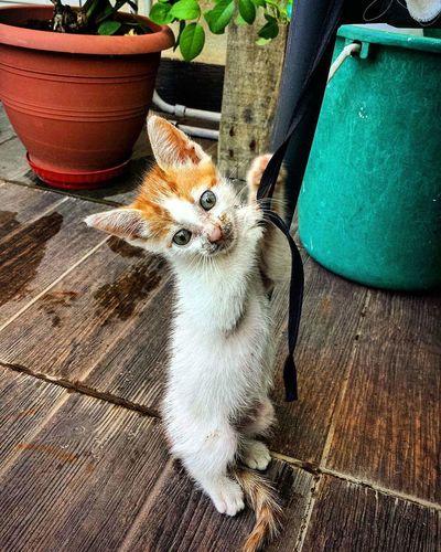 Alex Kitten Mine Naughty♥ Smart Beutiful  Naughtyboy Rescuecat Ginger Playful