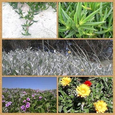 Flores... Floroj... Igersrs Igersbrasil Brazilingram Brasil flores floroj vegetaloj vegetais