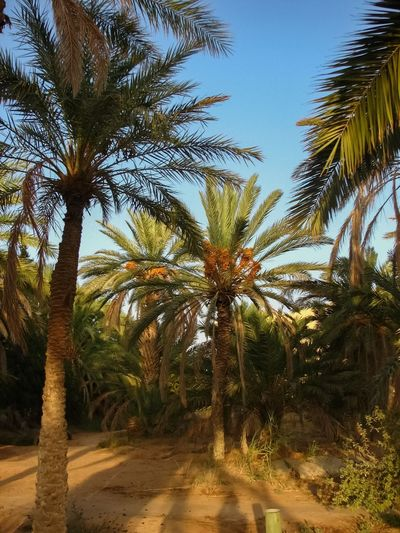 Palm trees by plants against sky
