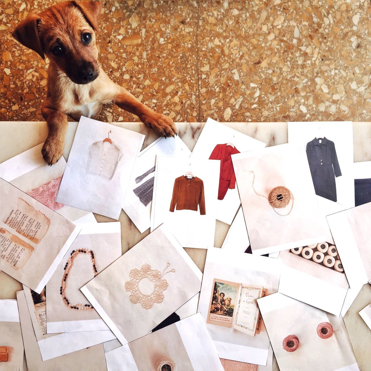 High angle view of dog rearing up at table with printed paper
