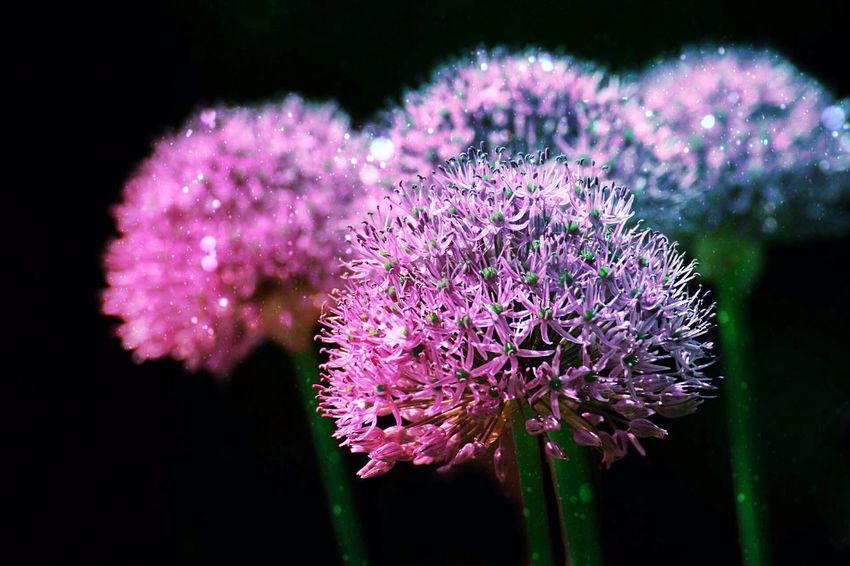 Flowers Flowers,Plants & Garden EyeEm Flower Purple Enjoying Life Taking Photos Photography