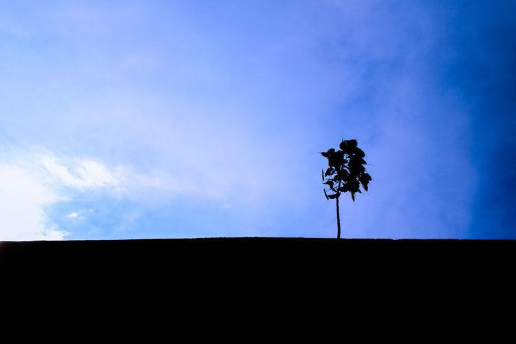 #EyeemPhilippines #EyeEm #EyeEmNewHere #EyeEmnaturelover #EyeEmReady #roadtrip #philippines #EyeEmSelects #minimalist #EyeEmBestShots Cloud - Sky Weather Vane Sky Silhouette Direction Low Angle View Wind Day Outdoors No People Blue Nature Rural Scene 10