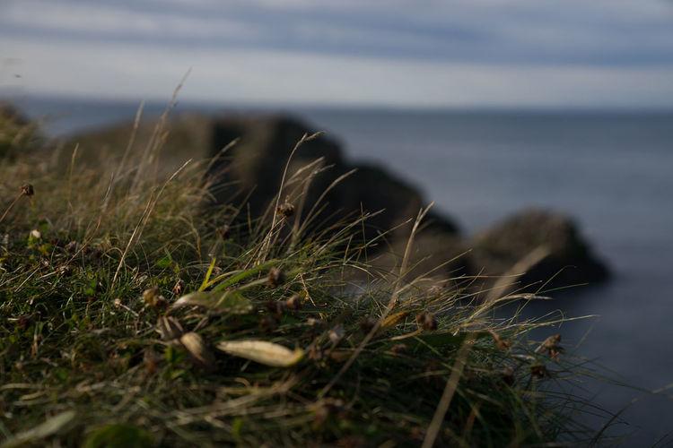 Close-up of grass on beach