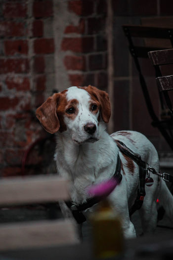 Good Boy Dogs Nature Portraits Animal Themes Beauty In Nature Brick Brick Wall Canine Dog Dog Love Domestic Domestic Animals Indoors  Looking At Camera Mammal Nature_collection Night No People One Animal Pets Portrait Selective Focus Sitting Vertebrate Wall