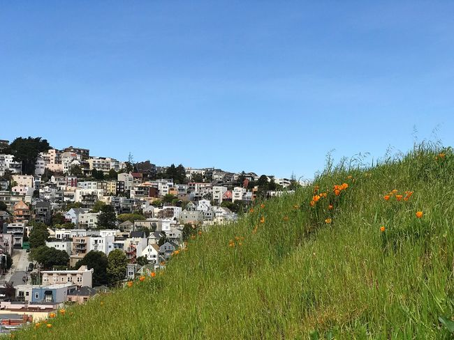 Building Exterior Architecture Built Structure Clear Sky House Blue Tree Outdoors Growth No People Day Nature Sky Grass Houses Hills Covered In Houses Kite Hill California Poppies In The Park Urban Hiking