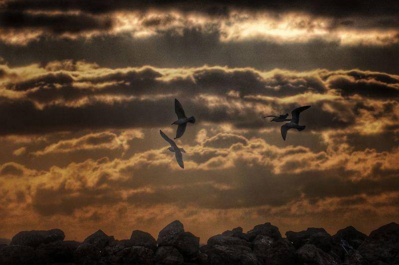 Birds Flying Against Sky During Sunset