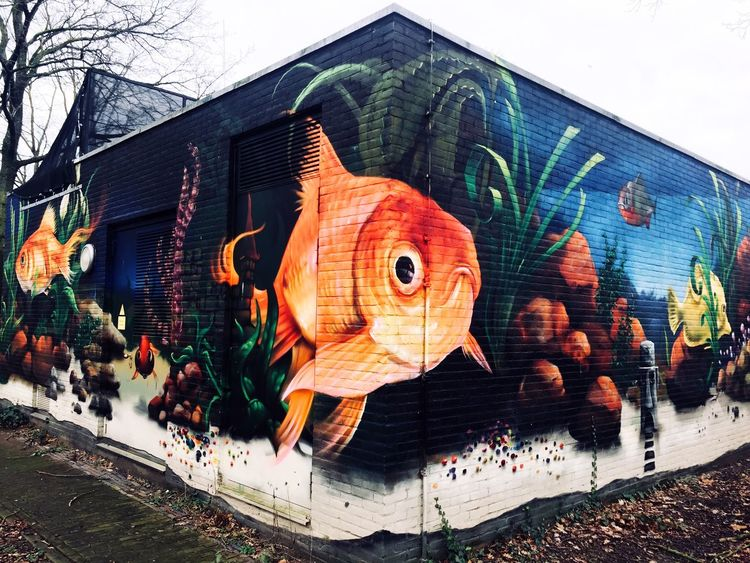 Finding Goldy.. Art Grafitti Nature Photography Nature_collection Nature EyeEmbestshots Eyeemphotography Photography EyeEmBestPics Eye4photography  Underwater Aqarium Goldfish Animal Themes Pet Fish Vis Day Outdoors Architecture Built Structure No People Close-up