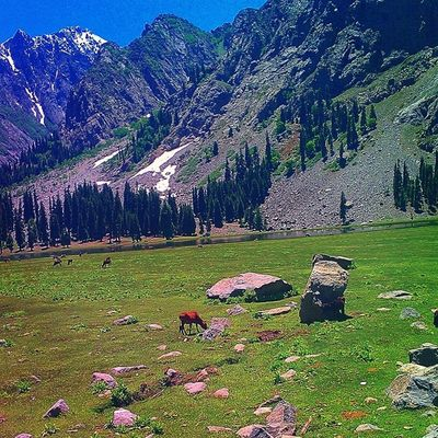 Lush Green Scenery Meadows grass beautiful swat valley pakistan freshwater lake trekking hiking touring travel naturelovers nature escapists heaven snowcovered mountains peaks mountainous landscape evergreen trees pines woods instatravel