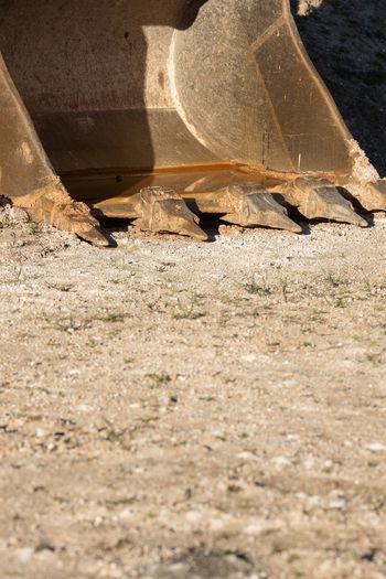 View of lizard on field