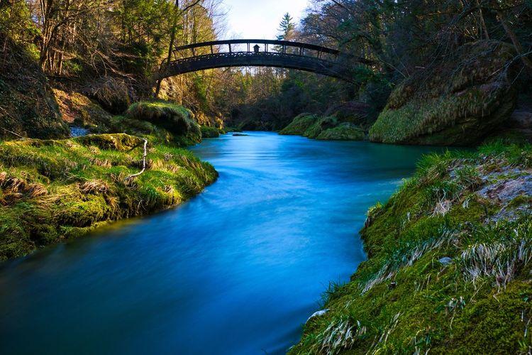 Arch bridge over river amidst trees