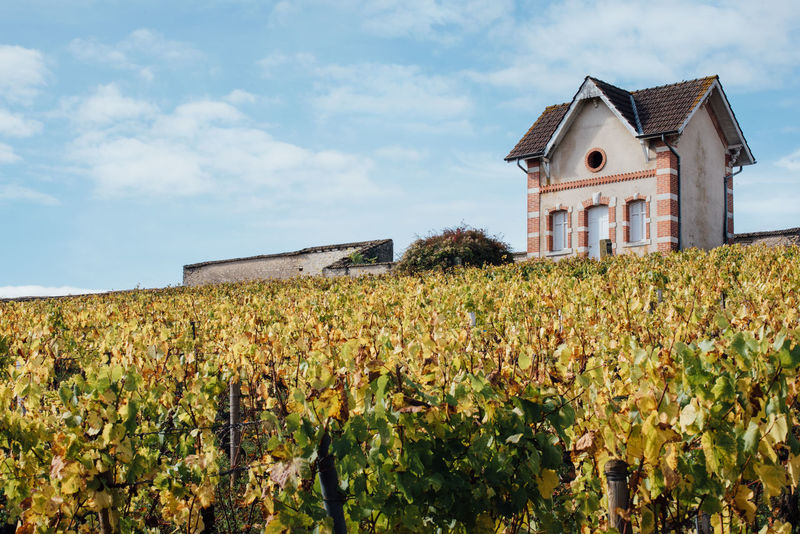 EyeEm Selects Agriculture House Rural Scene Field Architecture Cereal Plant Built Structure Building Exterior Outdoors No People Sky Day Vineyard Vineyards  Autumn Bourgogne Burgundy Leaf