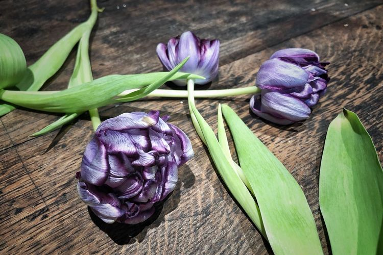Tulips Photooftheday Photographer Nature Photography Nature_collection Photography Picoftheday Purple Flower Flowering Plant Freshness Plant No People Nature Still Life Table Beauty In Nature Fragility Plant Part Green Color