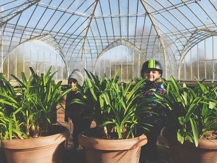 Greenhouse Growth Plant Agriculture Potted Plant Plant Nursery Day