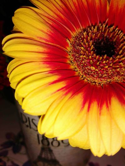 Can you bring me the sun in a gloomy day? No People Autumn Italy Rainy Days InnerLight Flower Head Flower Yellow Petal Red Close-up Blossom Gerbera Daisy EyeEmNewHere Fall Autumn Mood