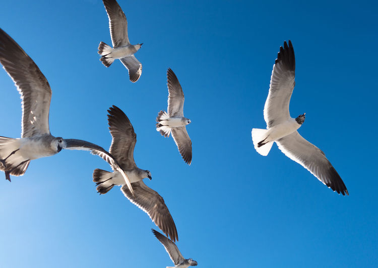 Flock Of Seagulls Flying Against Clear Sky