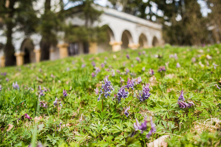 Akseli Gallen-Kallela's house and museum Akseli Gallen-Kallela Arch Architecture Beauty In Nature Built Structure Close-up Corydalis Day Flower Flower Head Focus On Foreground Fragility Freshness Grass Growth Nature No People Outdoors Plant Spring Spring Flowers