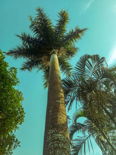 ต้นปาล์ม Tree Tree Area Tree Trunk Branch Forest Palm Tree Sky Green Color Plant Part Grove Coniferous Tree Spruce Tree Evergreen Tree Bamboo Grove Directly Below