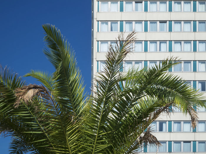 Date palm in front of the windows of a german hotel with summery blue sky. Palm Tree Built Structure Architecture Plant Building Exterior Tropical Climate Growth Tree Nature Building Palm Leaf No People Day Sky Green Color Leaf Sunlight Low Angle View Outdoors Clear Sky Phoenix Blue Sky Tree Palm Tree
