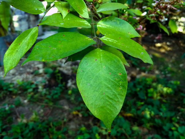 Green Color Leaf Nature Beauty In Nature Plant Growth