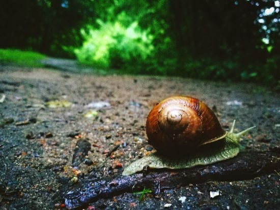 Road Photo Photography In Motion Onlyone Nature Survivor Slime Slimey Check This Out Taking Photos Animals Animal Animals In The Wild Animal Photography Shell
