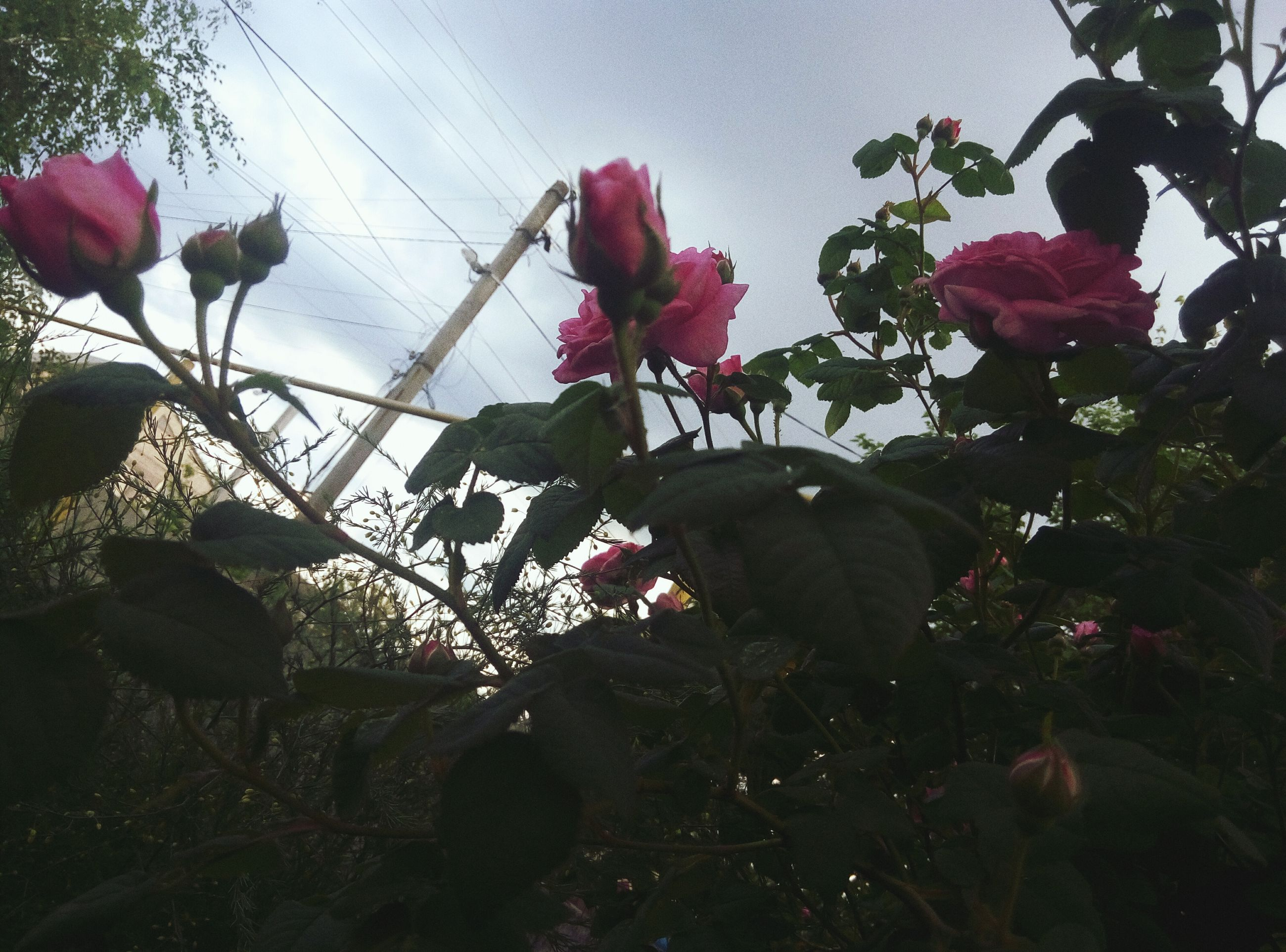 flower, low angle view, plant, nature, growth, fragility, petal, sky, outdoors, beauty in nature, no people, day, freshness, leaf, flower head, tree, blooming, close-up