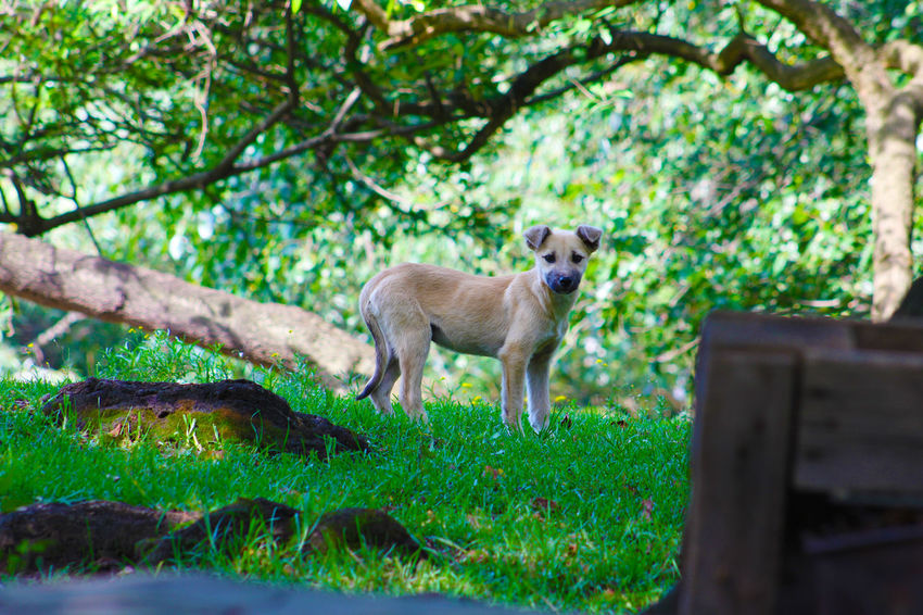 Animal Themes Beauty In Nature Day Focus On Foreground Forest Grass Green Color Growth Herbivorous Mammal Nature No People Outdoors Plant Portrait Selective Focus Tree Tree Trunk
