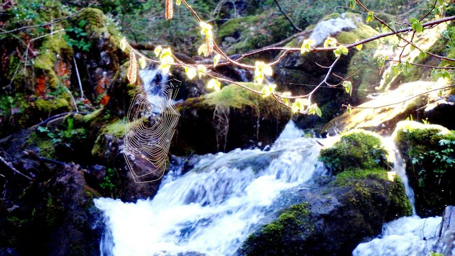Spiderweb River Water Nature Morning Light Architecture In Nature Beauty In Nature Flowing Water Tranquility Germany Grünten