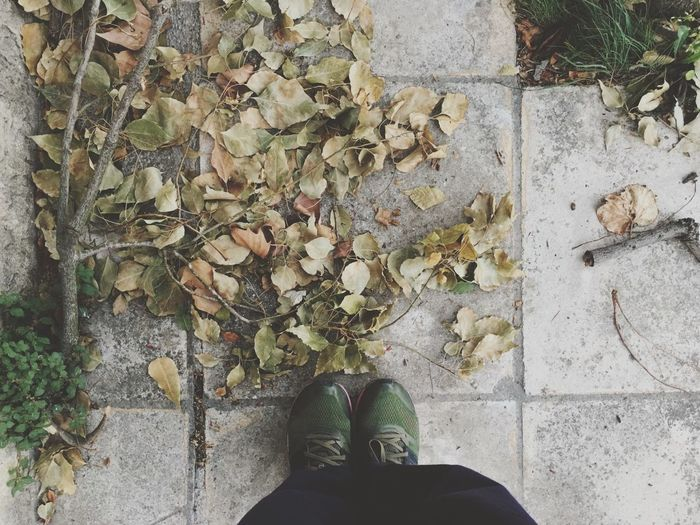 Low Section Of Person Standing On Walkway Covered With Leaves