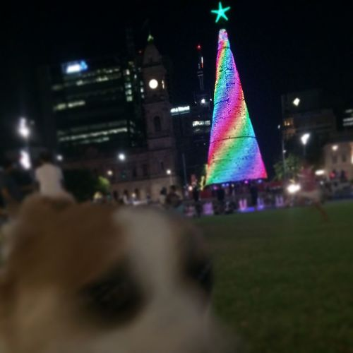 All The Neon Lights Christmas in Adelaide South Australia with Henryshouldbefamous