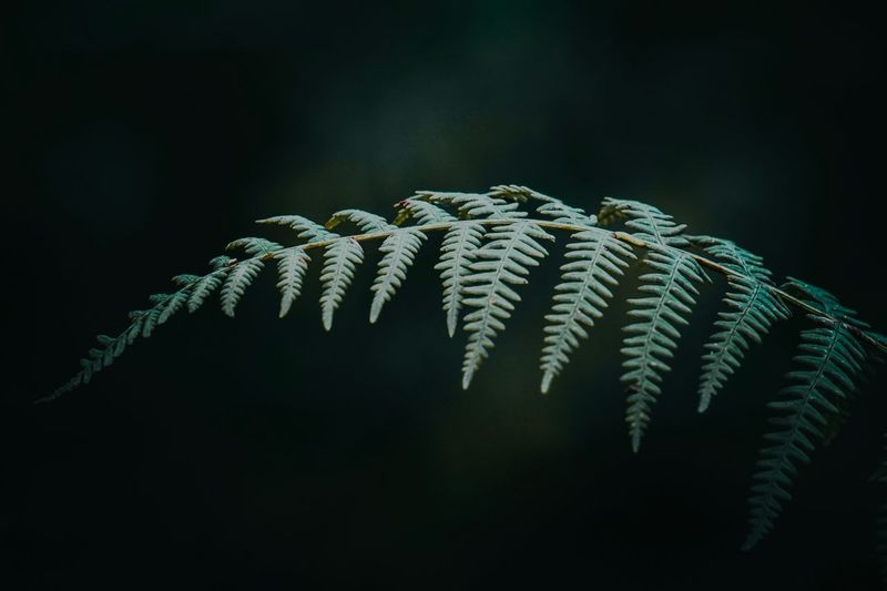 The fern in the mountain