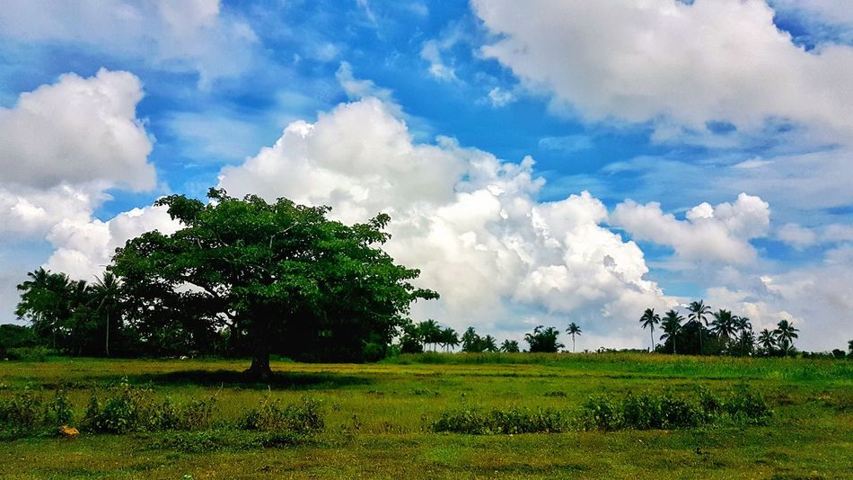 Tree And Sky Nature Rural Scene Grass Beauty In Nature Cloud - Sky