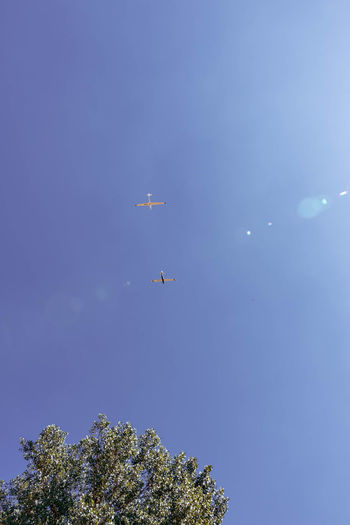 low angle view of airplane flying against clear blue sky Aerobatics Air Vehicle Airplane Beauty In Nature Blue Clear Sky Copy Space Day Feld Flying Juli Low Angle View Mid-air Mode Of Transportation Nature No People on the move Outdoors Plane Plant Sky Solitärbäume Transportation Travel Tree
