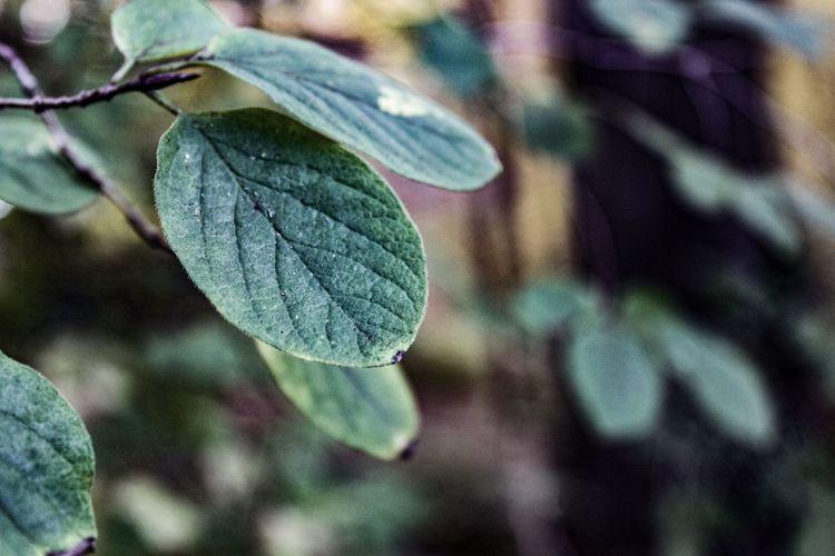 Veins, October