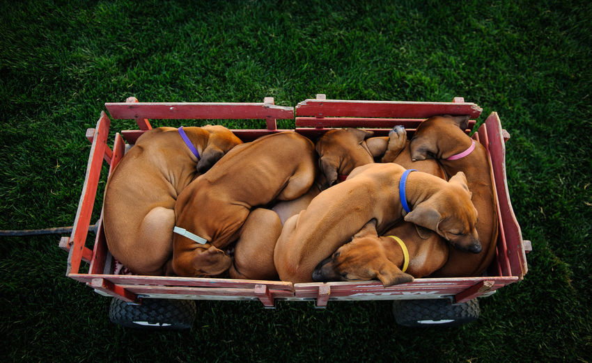 Dog Sleeping In Crate On Grass