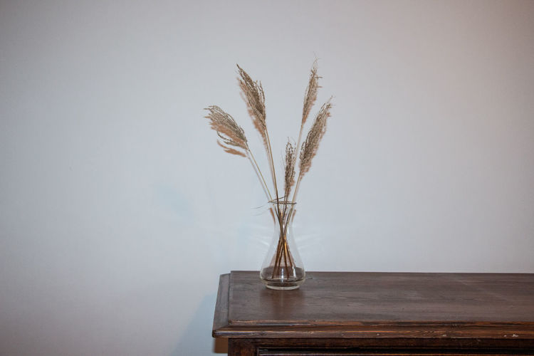Close-up of feather on table against wall