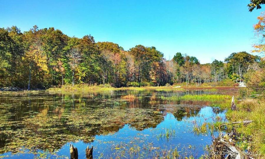 Wildcat Mountain State Park New Jersey Parks Autumn Colors Autumn Leaves Lake View Serenity Still Water New Jersey