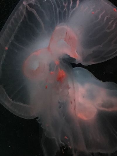 EyeEmNewHere NoFilterNoEdition Jellyfish