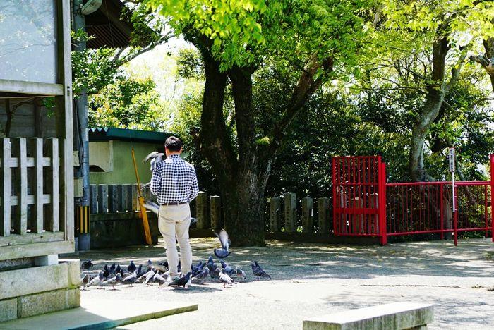 Shinto Shrine Fukuoka,Japan Fukuoka City  Atago Jinja Pigeons Pigeon Pigeon Bird  People Photography People Watching Looking At Camera