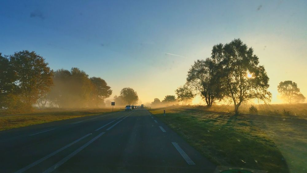 Ede Ginkelseheide Mistig Misty Morning Misty Mist Sunrise Sun Veluwe Hogeveluwe Zonsopkomst Natuur Dutch Landscape On The Road Landscapes With WhiteWall The Great Outdoors With Adobe MeinAutomoment The Drive The Great Outdoors - 2017 EyeEm Awards